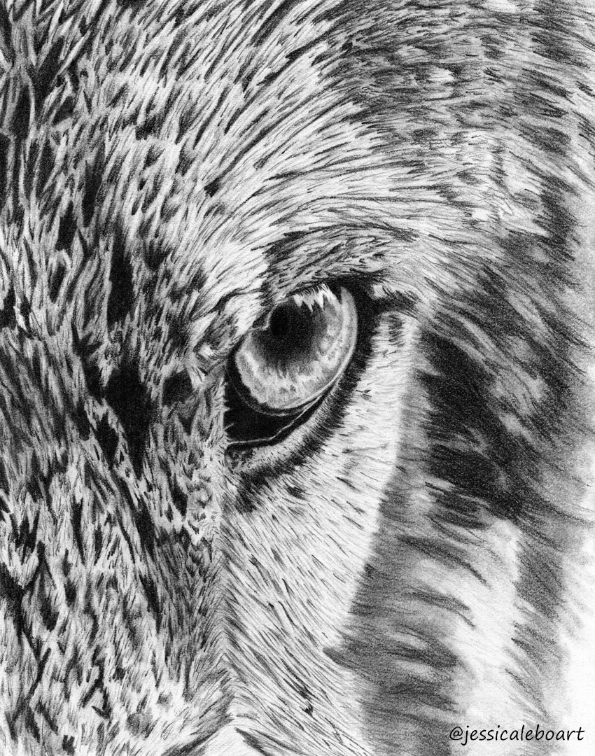 close up wolf eye fine art graphite pencil drawing