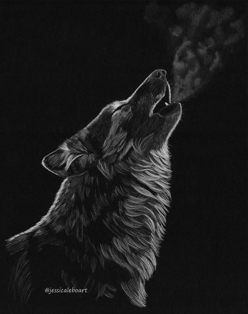 Fine art white colored pencil drawing sketch on black paper animal wolf howling wolf sketch