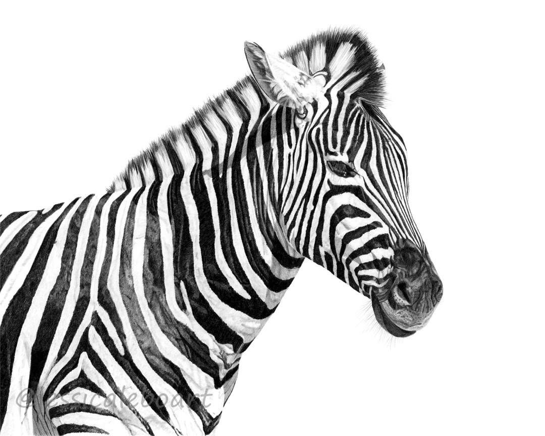 pencil artwork wildlife drawing fine art realism