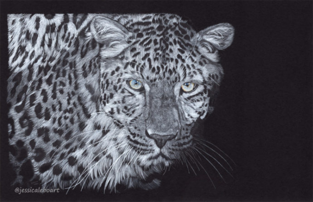 fine art colored pencil drawing on black paper leopard at night