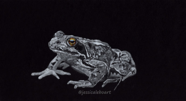 white pencil black paper animal drawing frog