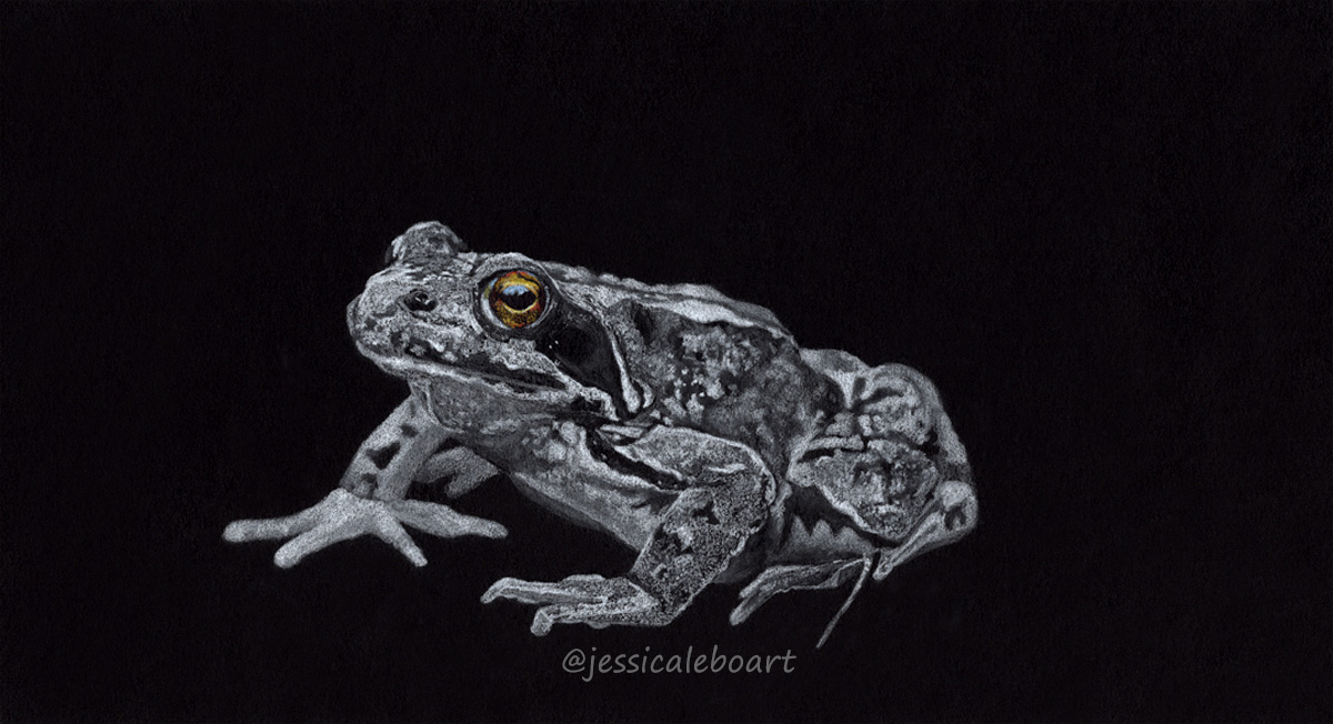 white colored pencil on black paper drawing frog with colored eye