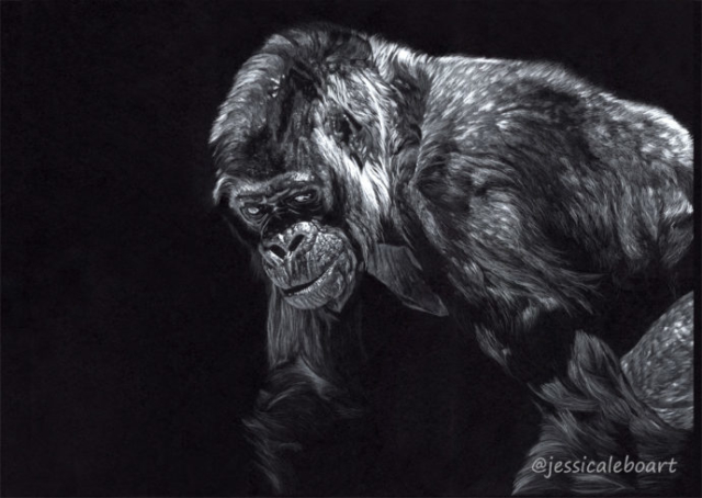gorilla colored pencil drawing white on black paper animal artwork