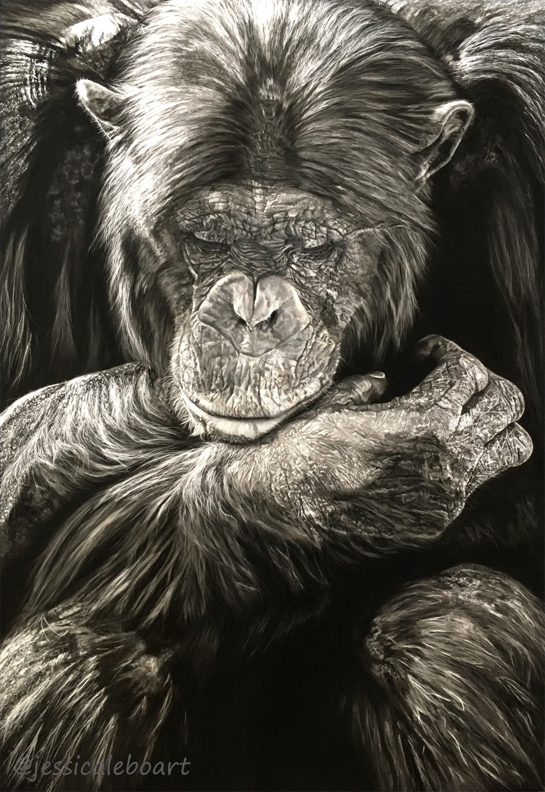 pastel realism wildlife drawing chimpanzee