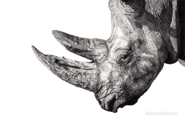graphite pencil animal drawing realistic wildlife
